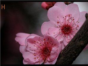 春天来了,十里桃花,我要去寻找三生三世