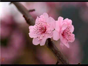 春天�砹耍�十里桃花,我要去�ふ胰�生三世