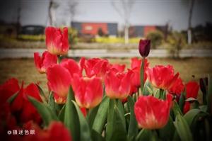 【春】春暖花开,春意盎然,春回大地,春春欲动(图片)