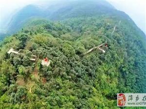 萍乡五峰山有个竹长城,你知道吗
