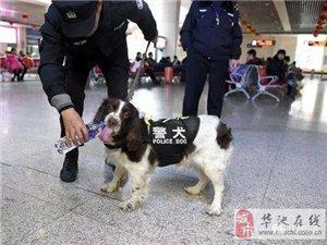 庆城利用警犬技术成功破获一起贩卖毒品案