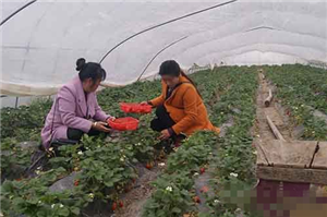 利辛县江集镇积极发挥妇女半边天作用,引导农家女发展特色产业