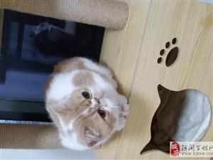 两只加菲猫可能得送养了。。准宝妈