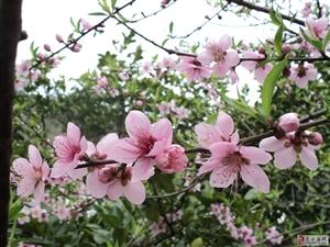 相约这醉人的春天,与你,共赴一场春暖花开的盛世欢宴!