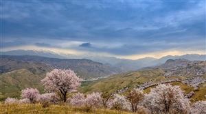位于亚欧大陆中部,地处中国西北边陲的天山雄鹰~新疆伊犁河谷(图片)