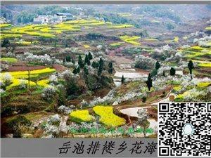 岳池李花节