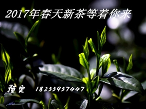 春暖花开 春意盎然 农家新茶预定了