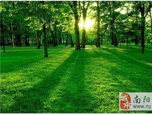 给你绿色般的森林浴