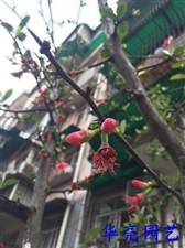 华亮园艺带您在马牧小区寻找春天的脚步,愿朋友们在这个春天里快快乐乐
