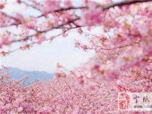 【特价游】玉渊潭赏樱花+逛798艺术街!49块钱就够了!