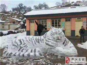 庆阳下雪了,堆雪人大比拼!有人竟然活生生堆出了一只大老虎