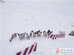 强降雪致甘肃6.1万人受灾 直接经济损失4400余万元