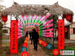 刘家沟村兰池生态园举办2017首届七彩风车艺术展