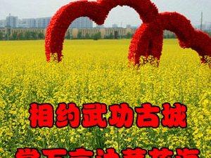【武功古城油菜花节】相约武功古城 赏万亩油菜花海