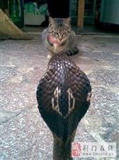 动物天团,动物世界里的精彩图片