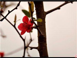 这两天,旺苍出现了一伙人,竟让旺苍的春天显得格外的绿!谢谢你们