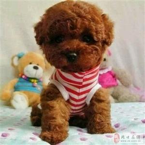希望可以找到狗狗的新主人,寻找有爱心人士