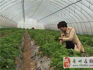 谯城:大学生返乡创业