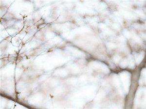 三月花(�h川)
