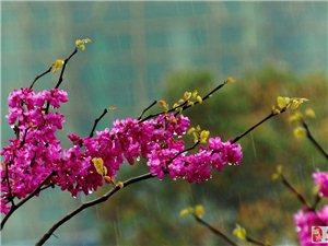 细雨花儿润,春光叶上归