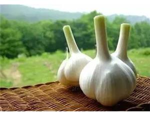 香菜、大蒜不是�S便吃的,�s�o告�V家里做�的人!