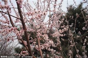 春光美      【7绝   5绝】