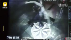 近日四川宜宾某小区电梯发生一起男子狂踢小哈士奇30秒恶性虐狗事件!