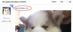 网友花了1100买了一只哈士奇,为什么总喜欢问值不值呢?