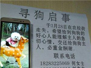 求好心人帮忙找找我家狗狗!感激不尽!好人一生平安!