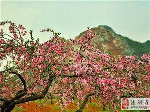 人间四月芳菲尽 山寺百花始盛开——4月长春观最美安阳大西南