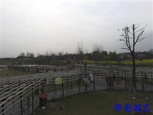 浪漫春天,相约雨涵农场,感受春的魅力~雨涵农场,您休闲娱乐的好去处