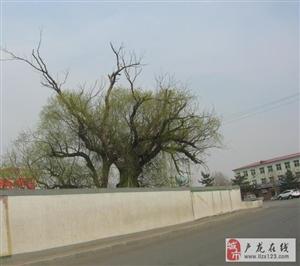 老不舍心,古树长新枝――为子民排碳