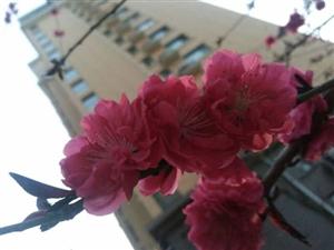 一夜春雨,花儿都开了