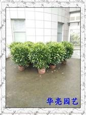 当好的器皿遇上好的植物,成就了华亮园艺的绿色空间-中国移动绿植一撇