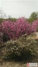 孤竹公园,春意盎然