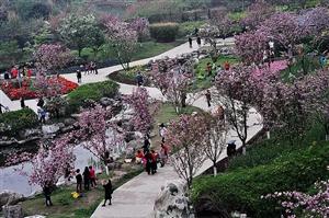 樱花欣赏~~~四月六日拍予青白江凤凰湖(组图)