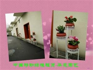 好好看,我们的花架组合盆景-中国移动盆景租赁实景拍摄(图片)