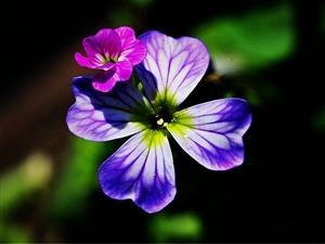 我是一颗��人知道的小花(四月十二日拍自和兴镇国防村花果新村)