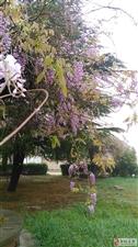 庭树不知人去尽, 春来还发旧时花。