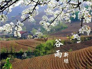 谷雨:抓住春天最后一个养生节点