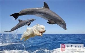 旋转,跳跃,眯着眼,是不是就成了小海豚了?
