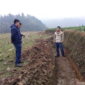 头京村大堰沟渠农田灌溉项目施工全过程