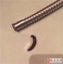 蚂蟥竟然从淋浴房管子里窜出来,太吓人!