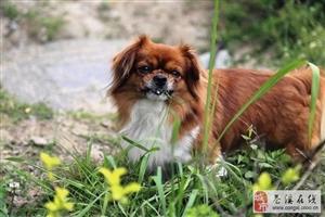 狗狗为什要吃青草呢?
