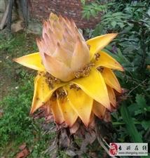 这个花你们见过吗