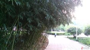 一阵狂风倒卷来,竹枝翻回向天开.