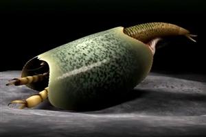 【社会】科学家发现5亿多年前生物化石或为螃蟹等生物的祖先
