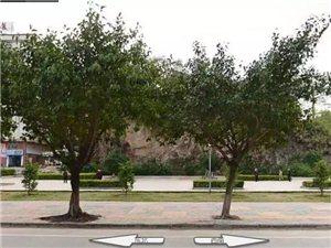 震撼钜惠,注册免费送白菜金网站文化广场左侧五一大型车展来啦!