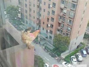 天哪,看看动物们每天都在干什么