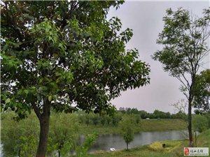 大美澳门金沙:罗平均摄影之春满三里河